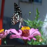 http://up.poshtiri.ir/view/1368518/5771651143.jpg