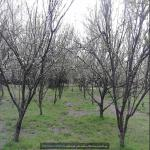 http://up.poshtiri.ir/view/1368543/715102200.jpg