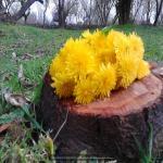 http://up.poshtiri.ir/view/1368545/696692688.jpg