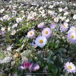 http://up.poshtiri.ir/view/1368548/7486210583.jpg