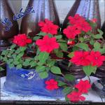 http://up.poshtiri.ir/view/1368704/8537768181.jpg