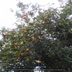 http://up.poshtiri.ir/view/1368705/2483292189.jpg