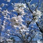 http://up.poshtiri.ir/view/1368711/3512603303.jpg