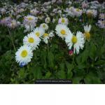 http://up.poshtiri.ir/view/1420030/3681001909.jpg