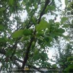 http://up.poshtiri.ir/view/1420031/3062931952.jpg
