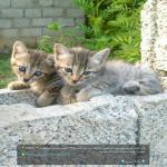 http://up.poshtiri.ir/view/1420037/349888314.jpg