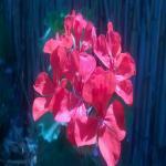 http://up.poshtiri.ir/view/409124/2223983993.jpg