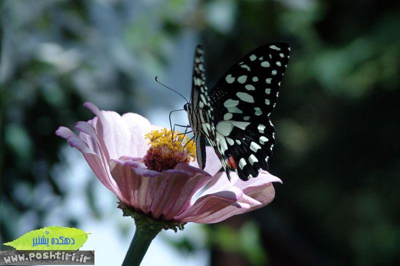 http://up.poshtiri.ir/up/poshtir/Pictures/bahram/2440375-0342f9be248cf9cc8e25d917f5ebc0a8-l.jpg